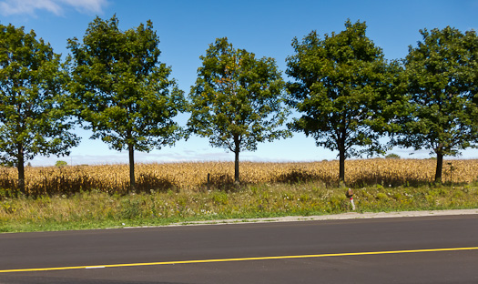 Trees along Highway 7